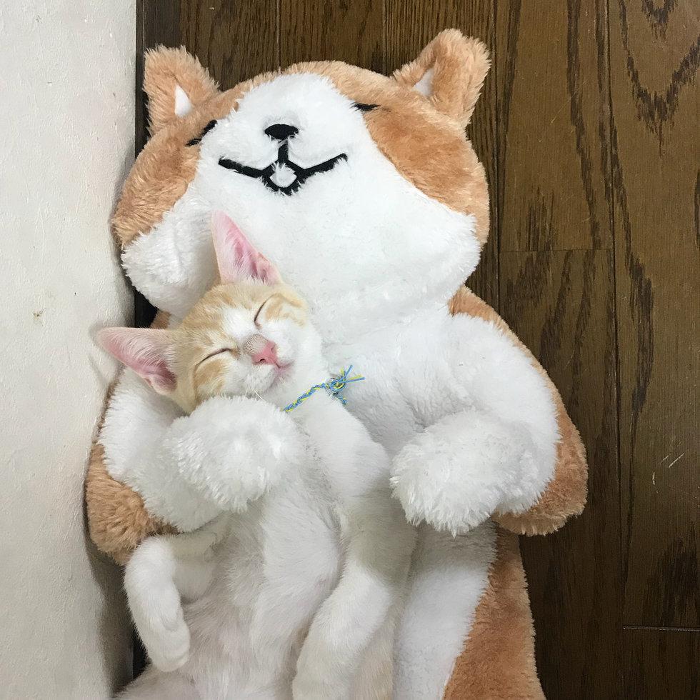Котёнок так сильно скучал по маме, что людям пришлось придумать ему кое-что на замену…