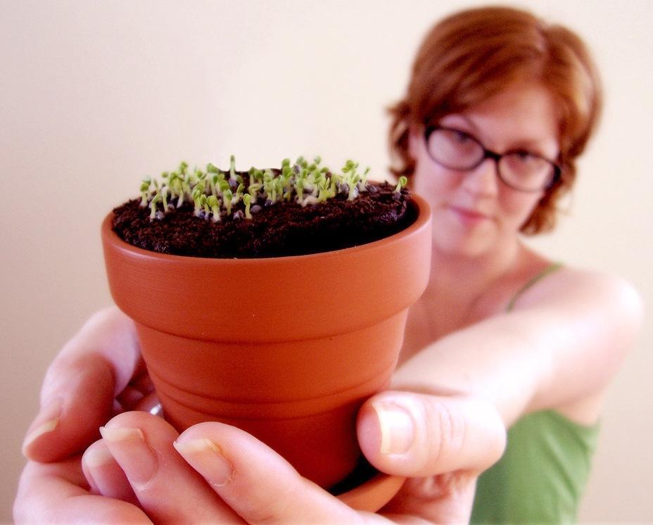 Январь: посевы цветов и закладка семян на стратификацию
