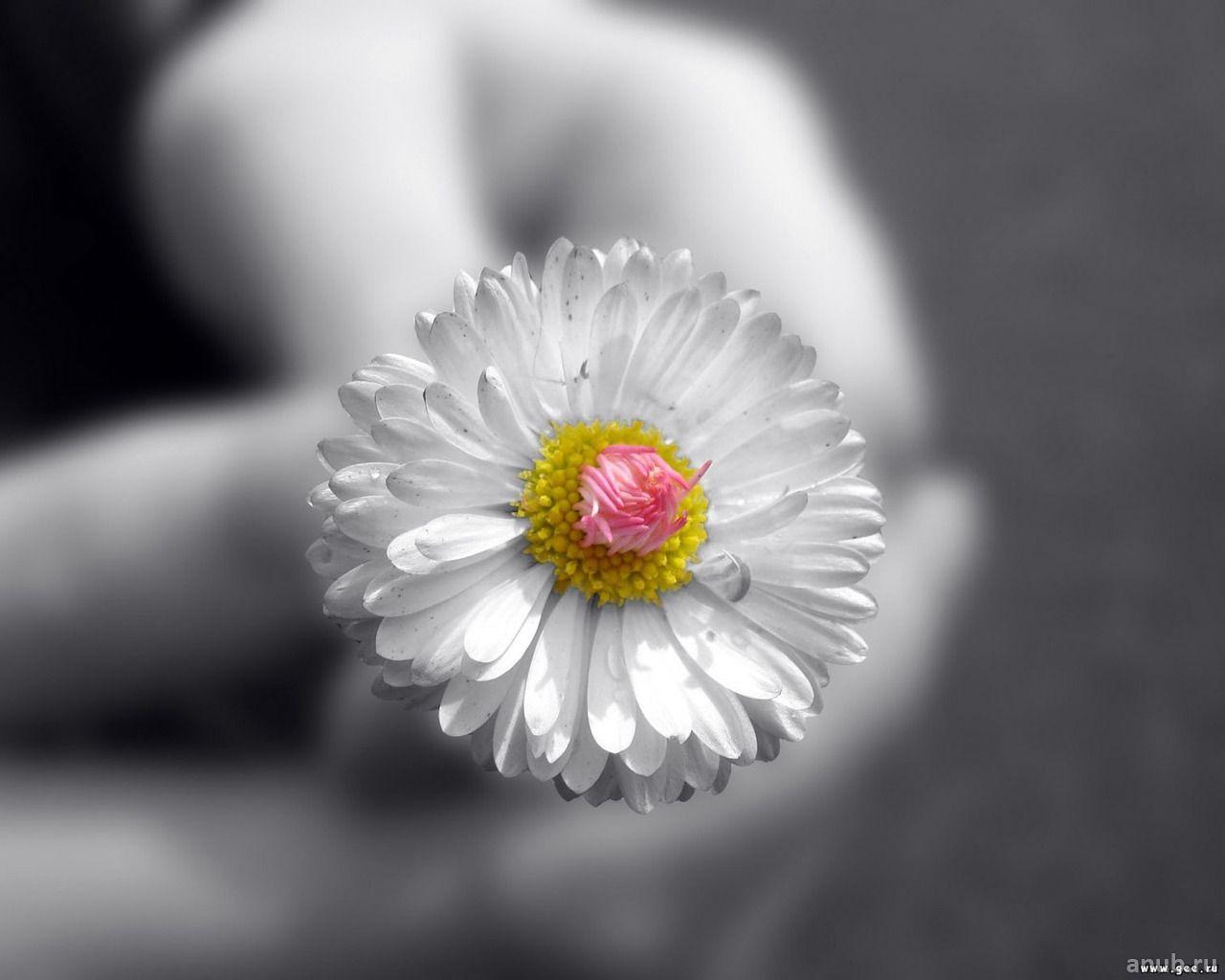 Цветы на рабочий стол 28фото