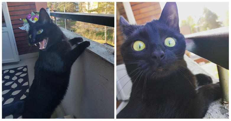 Кот в шоке!))