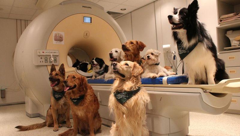 Исследователи объяснили, как собаки распознают отдельные слова человека