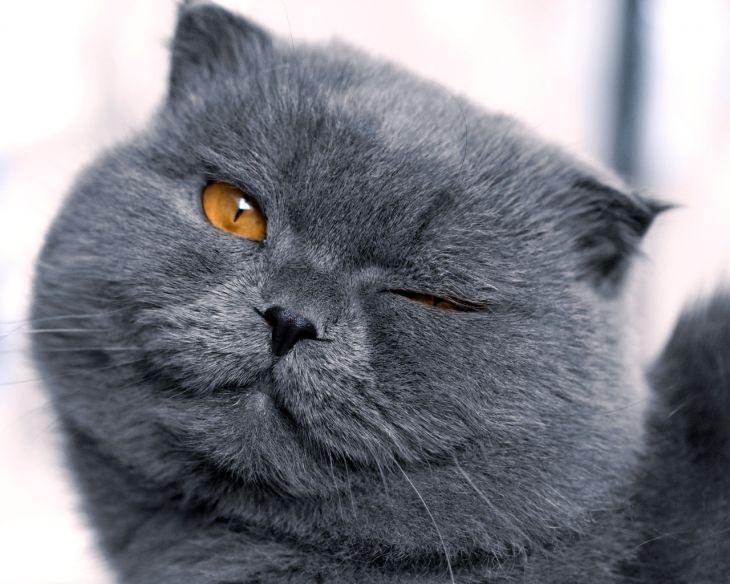 Брутальные коты
