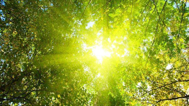Сила солнечного света