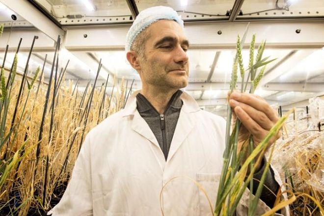 Ученые изобрели скоростной способ выращивания растений