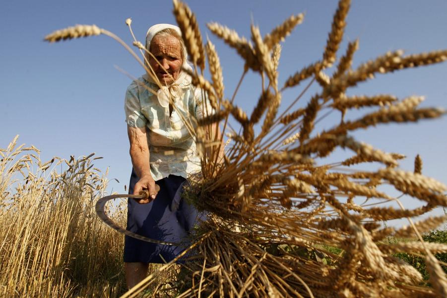 Урожай зерна без крестьян. Будущее уже наступило, деревни скоро не будет