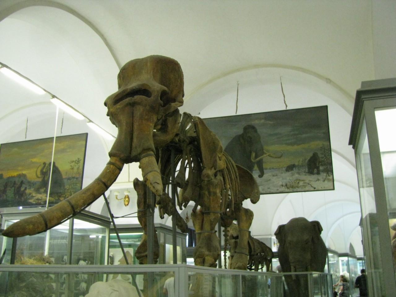 Зоологический музей Санкт-Петербурга - 2. Дом для мамонтёнка Димы.