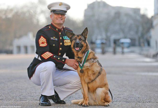 Собака-герой потеряла лапу, но сохранила любовь в сердце: история храброй Лукки