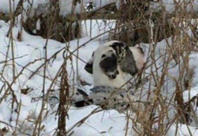 Спасение собаки, которую привязали к дереву и оставили умирать