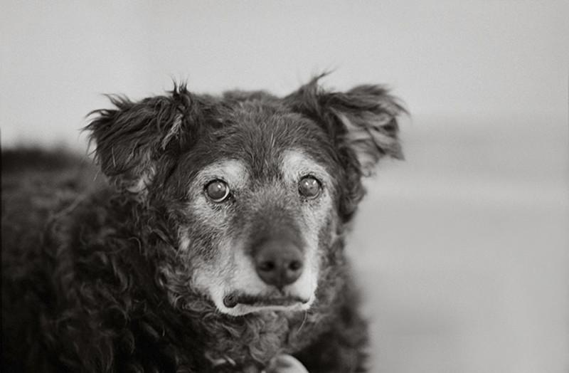 Керли (14 лет) собаки, фото собак, фотографии животных
