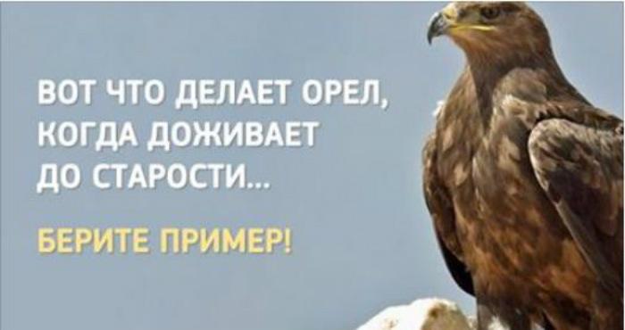 Когда орел доживает до старости, он делает удивительную вещь