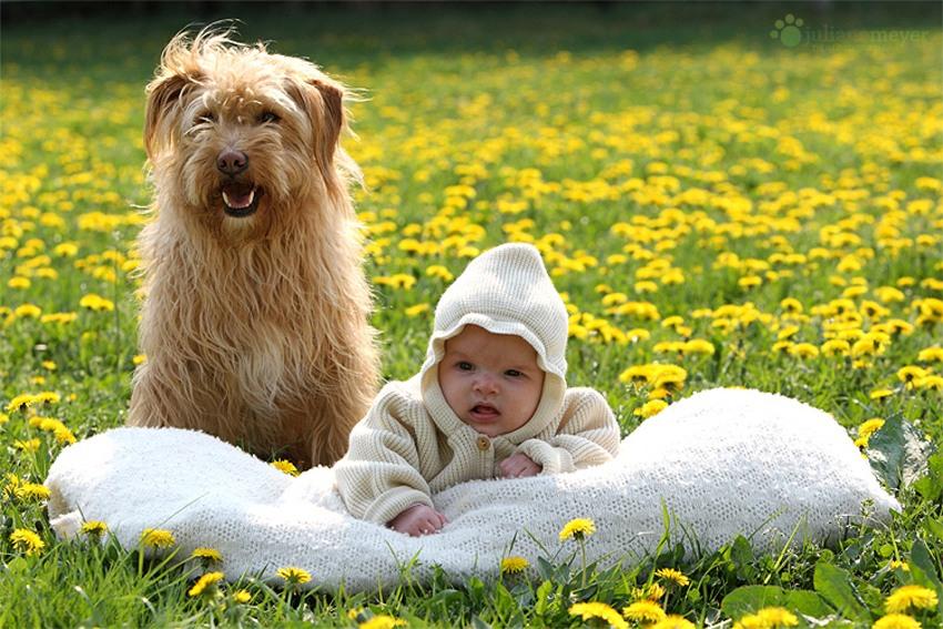 NewPix. ru - Милые щенки от фотографа Юлианы Мейер