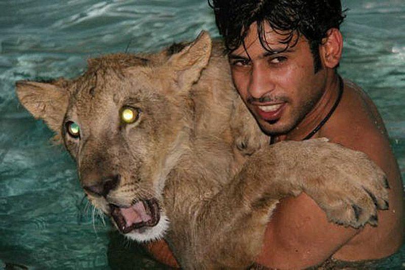 catsncars12 Хищные кошечки и дорогие машины: досуг арабского миллионера