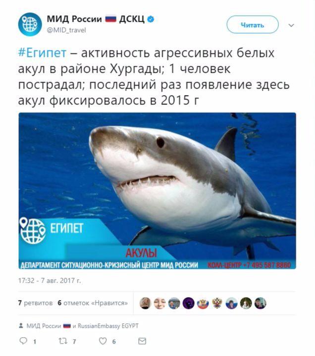 крупного рогатого в хургаде белая акула напала на человека Детская