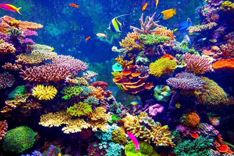 Морской биолог нашел способ быстро выращивать кораллы