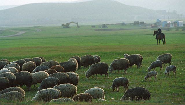 В Казахстане молния убила чабана и полторы тысячи овец