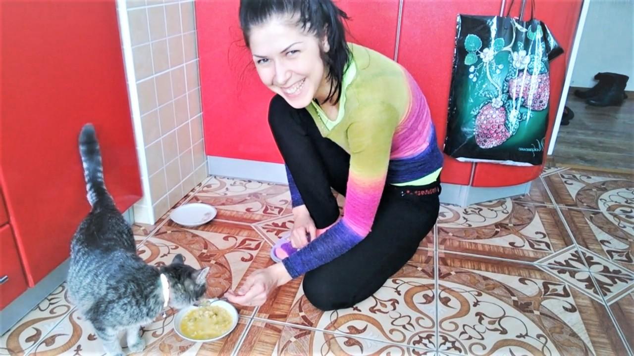 Смешные кошки коты и собаки Как мы кушаем