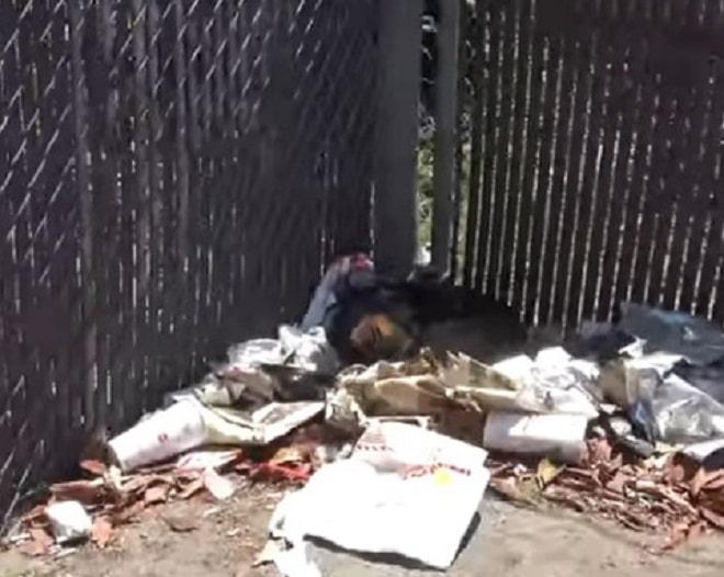Среди мусора лежал несчастный пес, который был никому не нужен