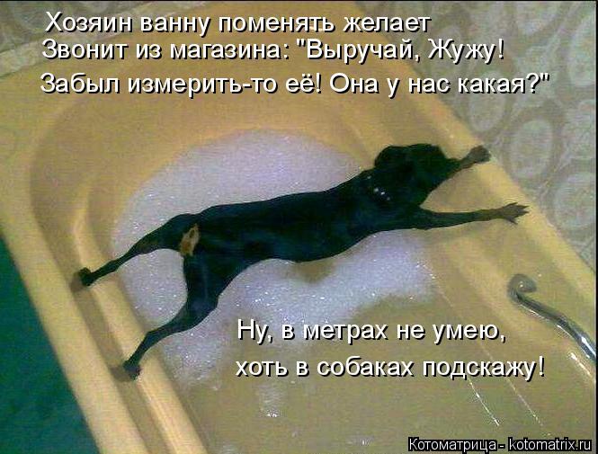 """Котоматрица: Хозяин ванну поменять желает Звонит из магазина: """"Выручай, Жужу! Забыл измерить-то её! Она у нас какая?"""" Ну, в метрах не умею, хоть в собаках по"""