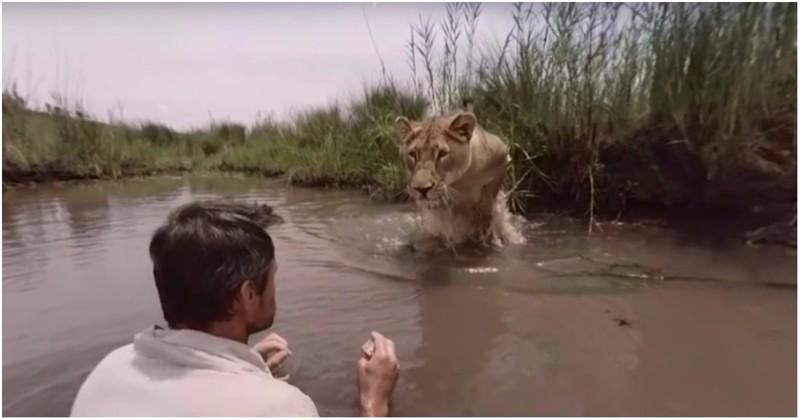 На мужчину из кустов прыгнула огромная львица... чтобы обнять и облизнуть!