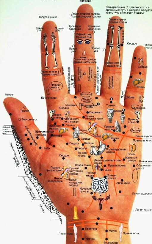 Диагностика человеческого организма по кистям рук и ладоням...