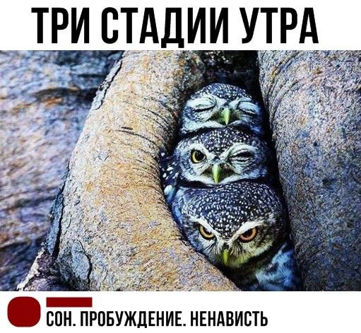 Три стадии утра))