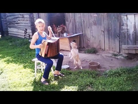 Угарные приколы про домашних животных Самые милые животные коты и собаки smart videos cute pets
