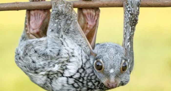 16 самых необычных животных …