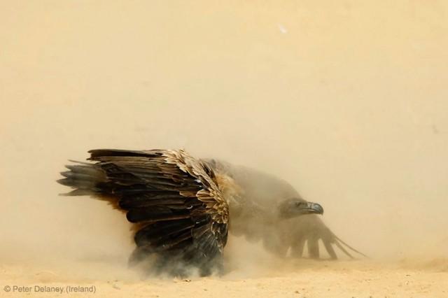 Забавные фото победителей конкурса Wildlife Photographer of the Year (7)
