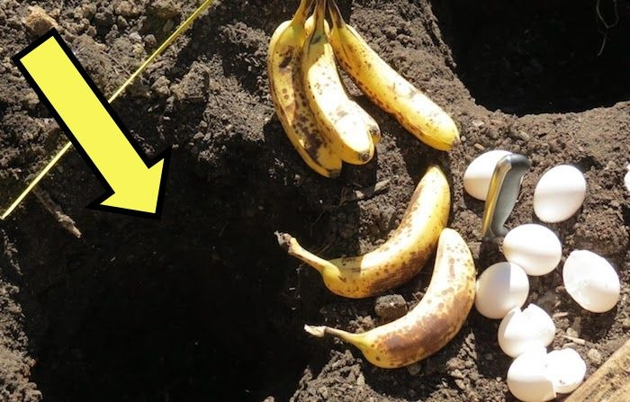 Банановая шкурка+скорлупа=?