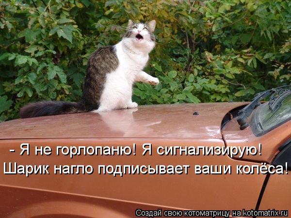 Котоматрица: - Я не горлопаню! Я сигнализирую! Шарик нагло подписывает ваши колёса!!