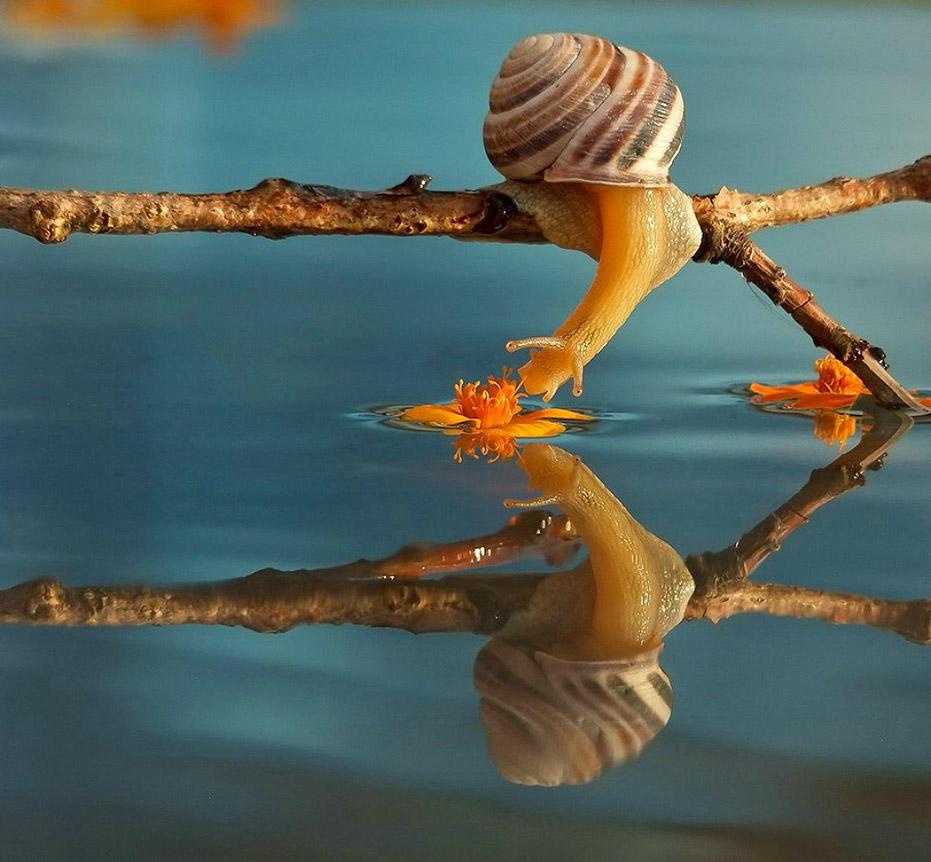Сказка природы от украинского фотографа Вячеслава Мищенко