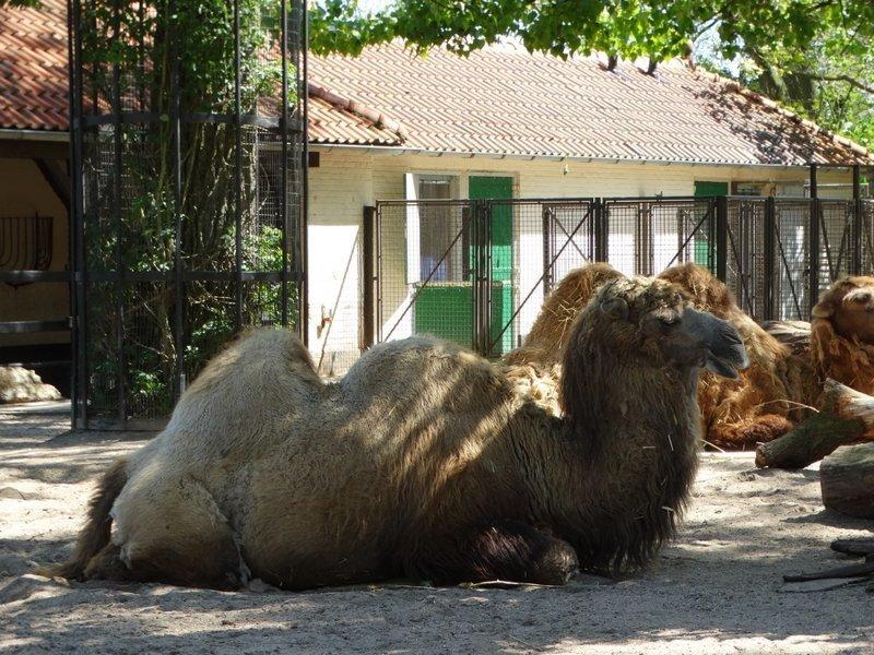 Королевский зоопарк Амстердама зоопарк, путешествия, факты, фото