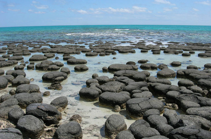 Живые камни Австралии