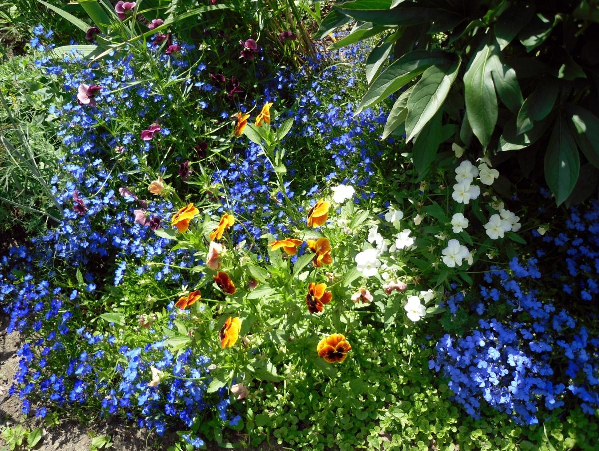 Арункус или волжанка двудомная: идеальное растение для тенистых участков