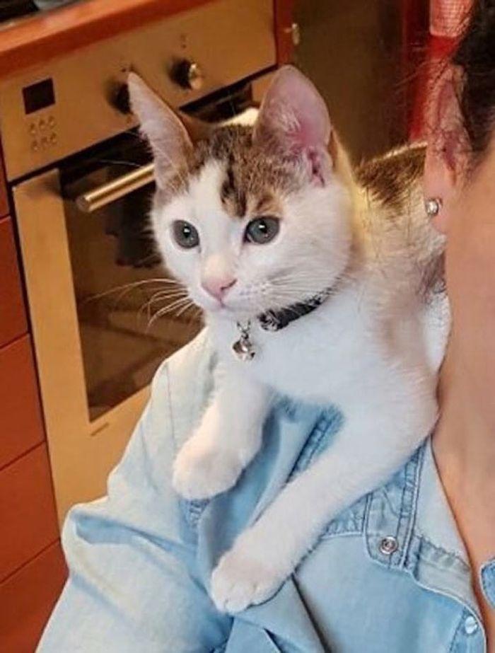 Спасая котёнка из мусорного бака, женщина и не представляла насколько он редкий!