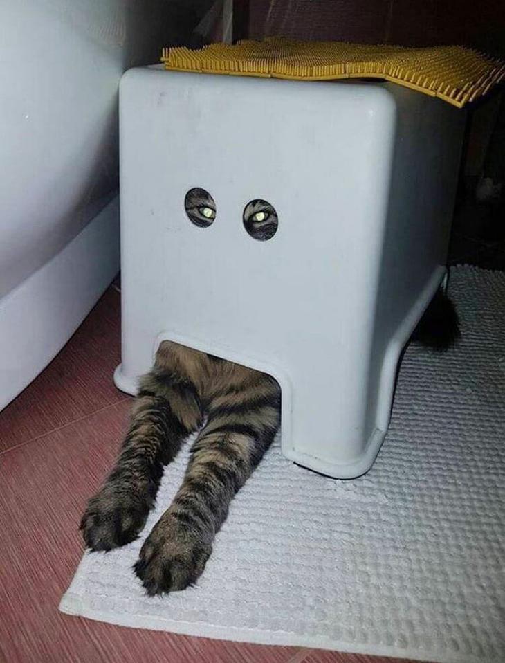 Коты, глядя на которых невоз…