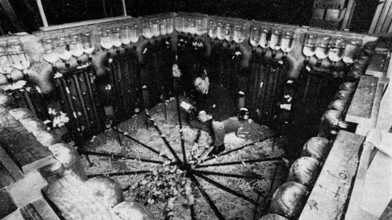 Эксперимент «Вселенная-25»: как рай стал адом