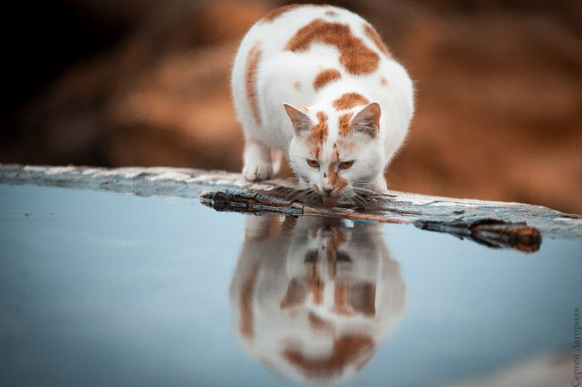 Одесские коты кот, одесса