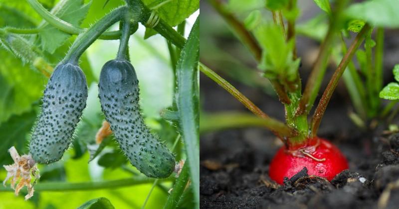 посадка овощей в 2019 году