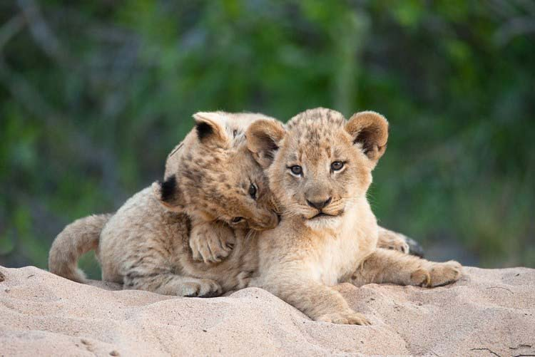 Очаровательные братья и сестры в мире животных
