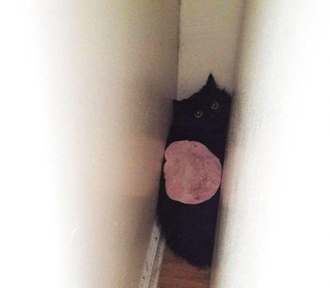 кот схватил кусок ветчины