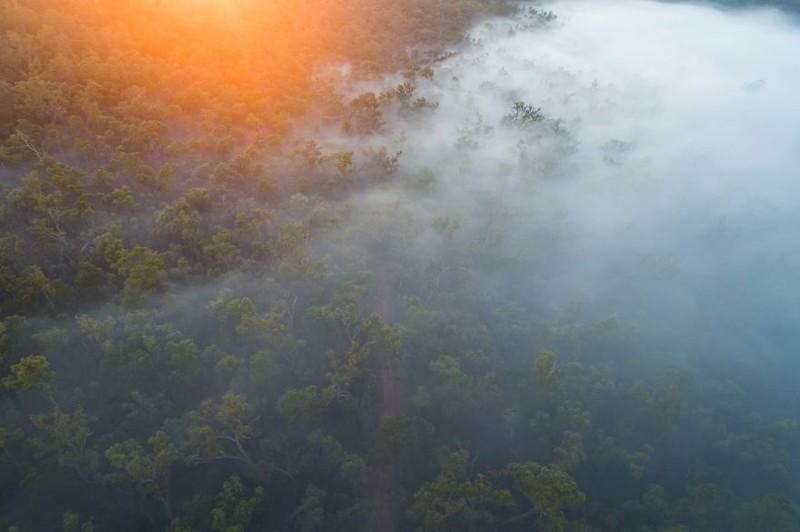 Таинственный лес австралия, где зимой рай, зима, красота, мягкий климат, пейзажи, тепло, фото