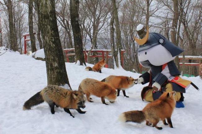 Лисья деревня в Японии деревня, лисы, япония