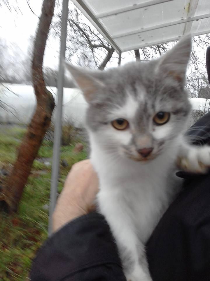 Замерзает котик на даче