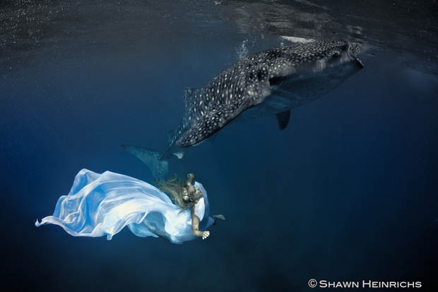 Удивительная подводная фотосессия с китовыми акулами