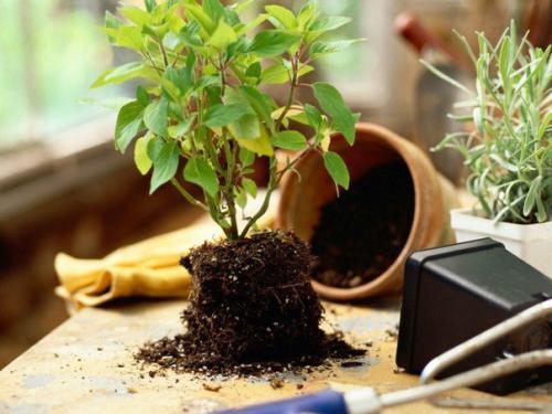 Как быстро избавиться от мошек в растениях.
