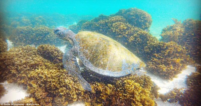 Галапагосские острова - настоящий рай на Земле Галапагосы, Поездки, галапагосские острова, животные, красота, природа, растения, туризм