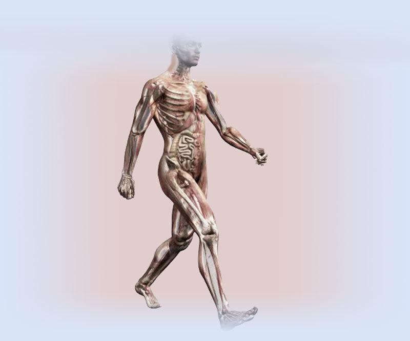 Почему самое полезное упражнение — ходьба. Научные данные.