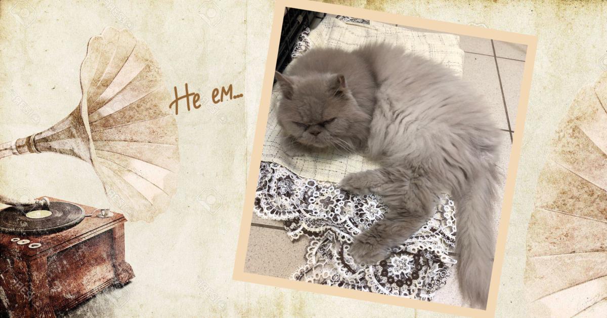 «Лоток, совок и плед…» Персидского кота выбросили на мусорку аэропорта — и он объявил голодовку