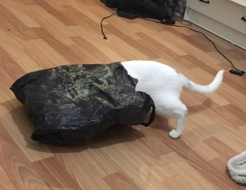 Любители кошек и японской поэзии решили посмотреть, что будет, если объединить эти две вещи вместе. Получилось очень весело